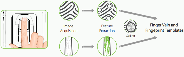 Multi-Biometric features extraction process: